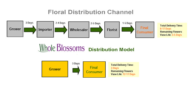 Why Buy From Whole Blossoms Flower Distribution Channel