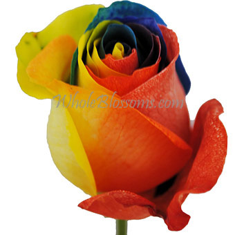 Red Yellow Blue Tinted Rose for Valentine's Day