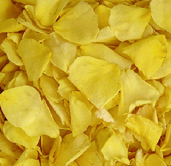 Yellow Rose Petals Freeze Dried