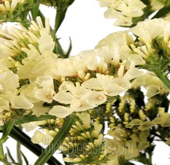 Wholesale yellow statice filler flower online yellow statice filler flower mightylinksfo