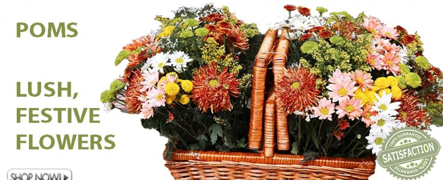 Wholesale Chrysanthemums