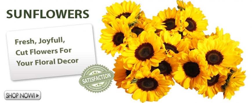 Bulk Sunflowers