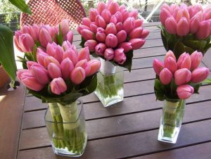 Buy wholesale tulips flowers
