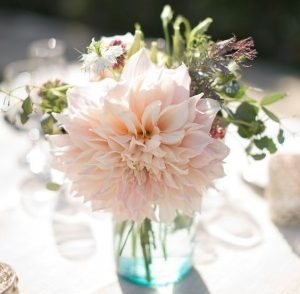 Buy Wholesale Dahlias