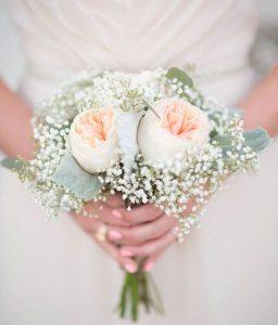 Buy Garden Roses Online