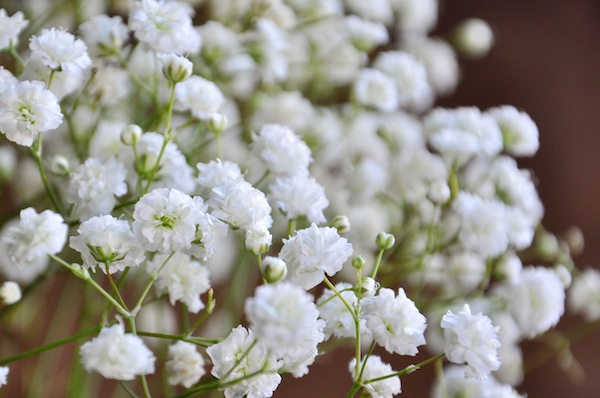 Wholesale Baby's Breath Flowers In Bulk