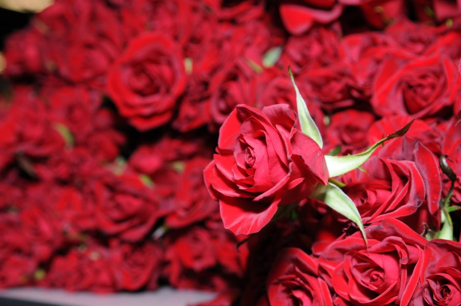 wholesale fresh flowers