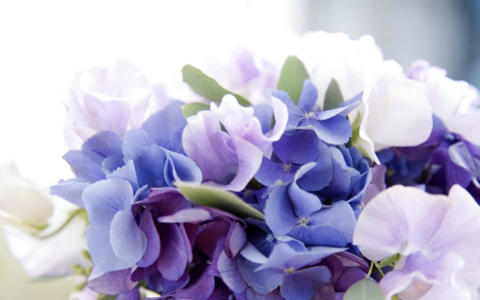 Bulk hydrangeas for sale