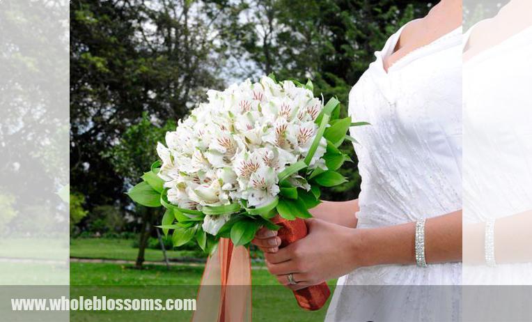 White Alstroemeria Flower
