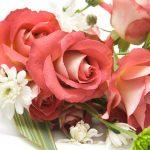 Buy bulk flowers online