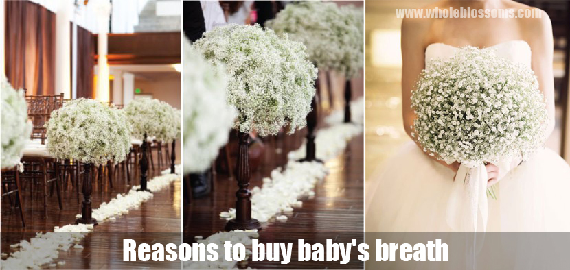 Baby's Breath In Bulk