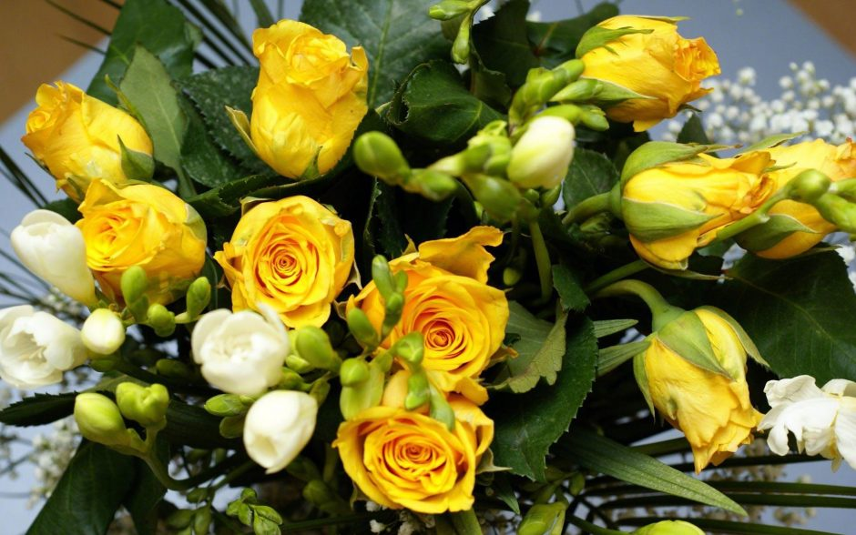 Buy Yellow Rose