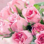Fresh cut wholesale flowers