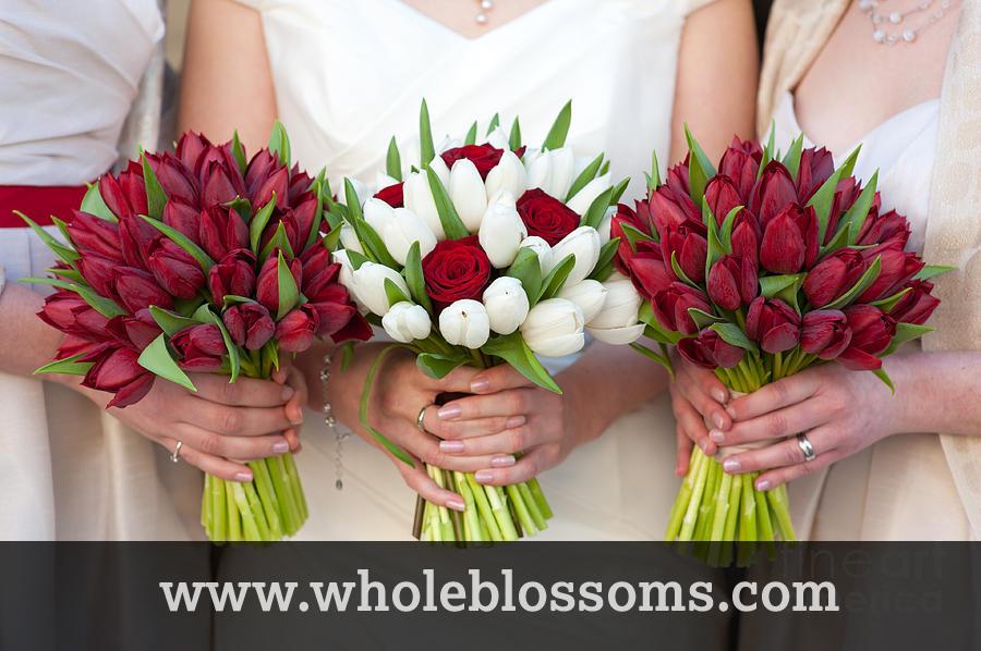 Buy wholesale tulip flowers