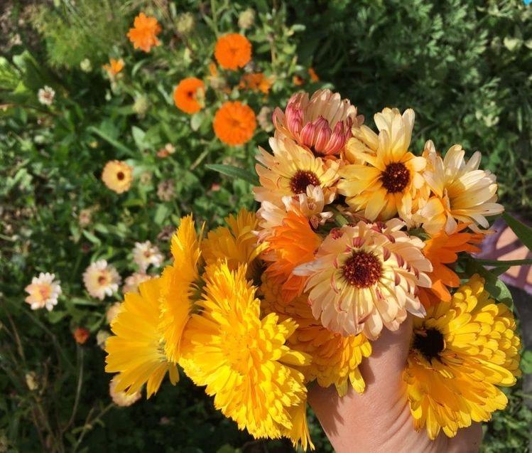 bulk calendula flowers