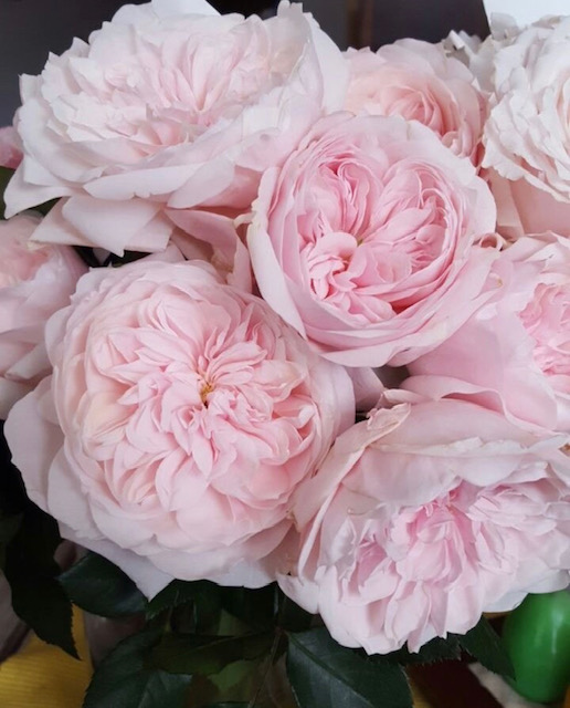 Pink Garden Rose Flowers