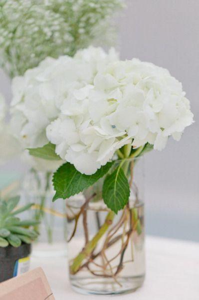 white hydrangea in a vase