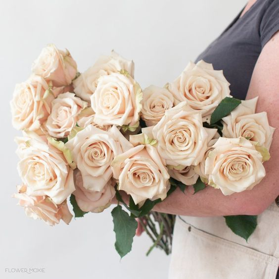 sahara roses